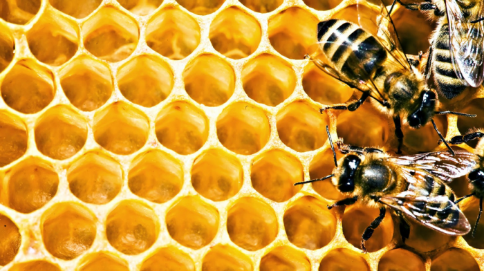 Honey Processing Methods for Drug